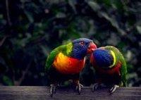 两只鹦鹉在激情的