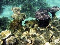 三亚国家珊瑚礁自然保护区