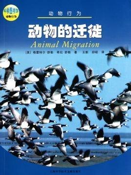 海洋动物公益海报