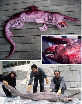 但精灵鲨是这些深海动物中外形最为可怕的动物之一