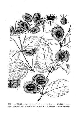 藤植物手绘线稿