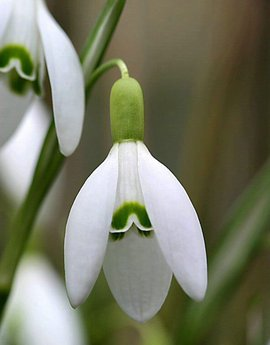 丝带花叶制作图解