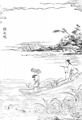 国画 简笔画 手绘 线稿 268_391 竖版 竖屏