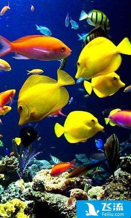 动态壁纸环境:安卓系统 相关介绍 海底世界动态壁纸是一款非常漂亮的