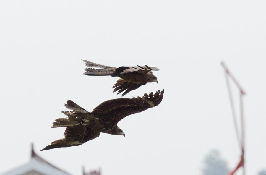 壁纸 动物 鸟 鸟类 雀 900_592