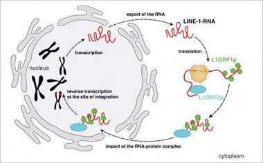 改变其分子内部结构和性质从而变成变性蛋白.