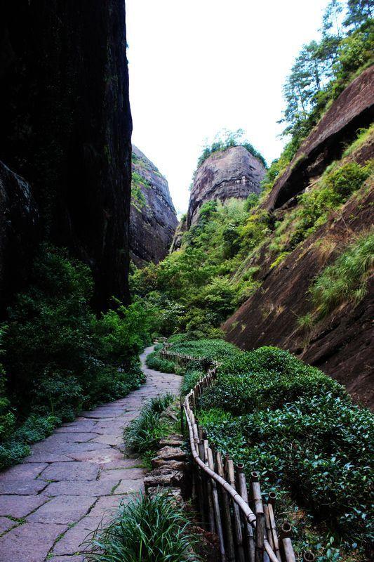 大红袍景区位于武夷山风景区的中心部位