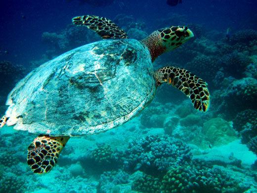 地球上最大的海洋生物保护地
