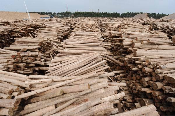 竹子造纸的步骤