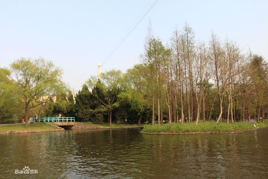 上海共青森林公园