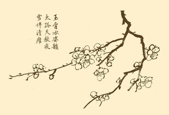 """梅是中国特有的传统花果,已有3000多年的应用历史。《书经》云:""""若作和羹,尔唯盐梅。""""《礼记内则》载:桃诸梅诸卵盐。《诗经周南》云:""""摽有梅,其实七兮!""""在《秦风终南》、《陈风墓门》、曹风鸬鸠》等诗篇中,也都提到梅。上述古书的记载说明,古时梅子是代酪作为调味品的,系祭祀、烹调和馈赠等不可或缺东西至少在2500年前的春秋时代,就已开始引种驯化野梅使之成为家梅---果梅。"""