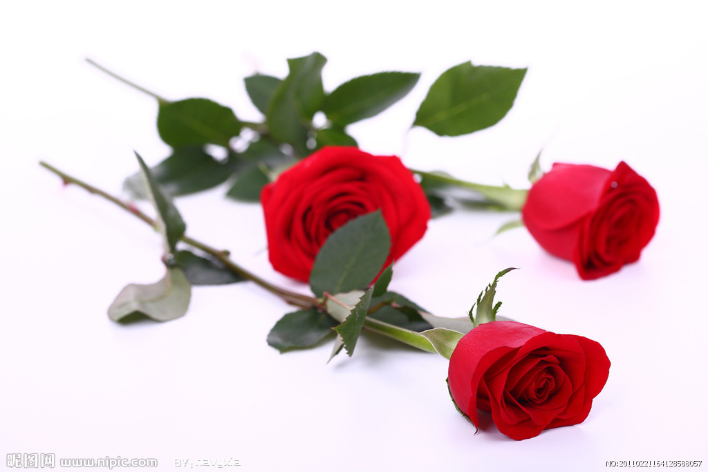 玫瑰杯花折叠方法图解