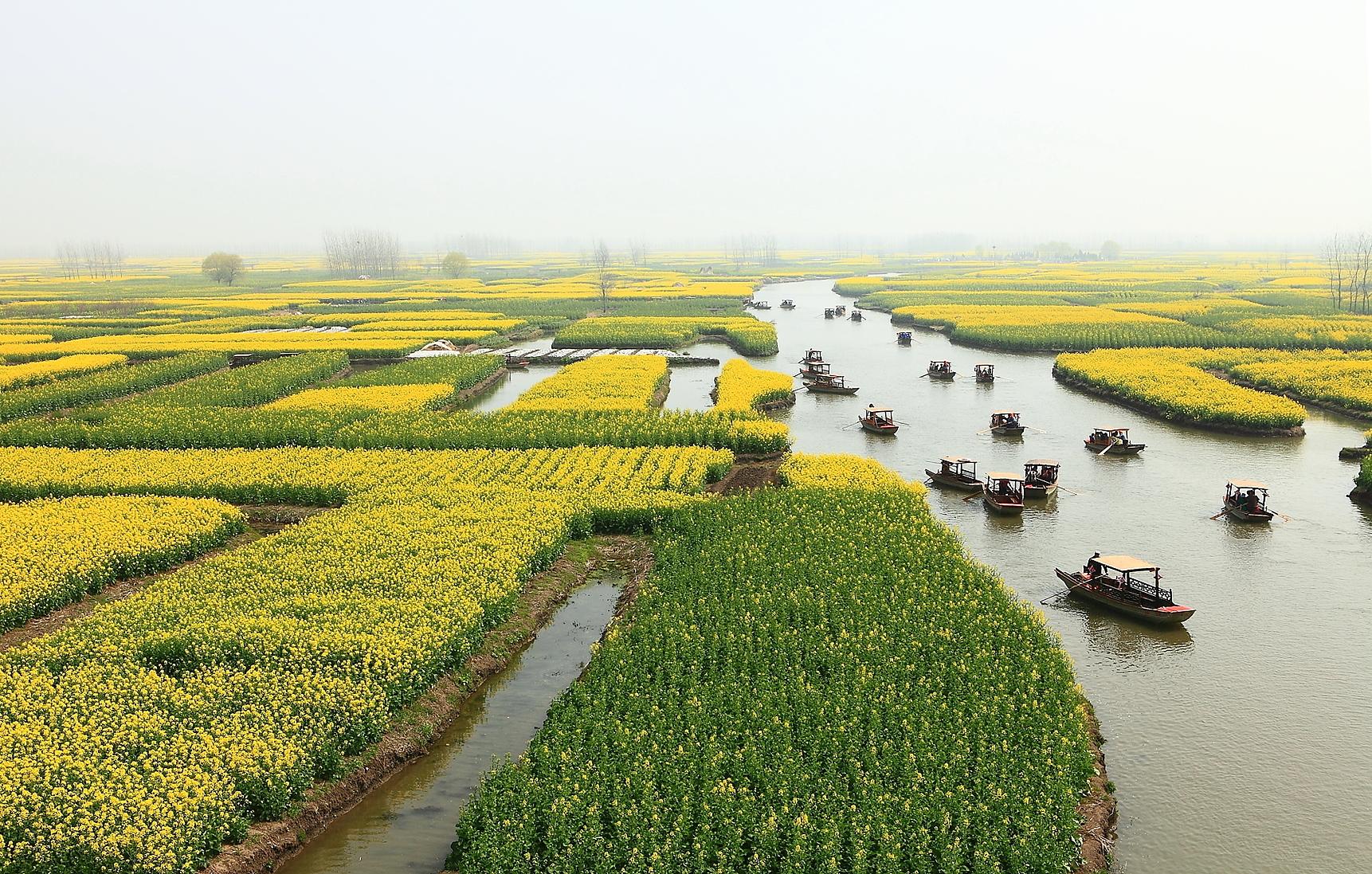 千岛菜花风景区
