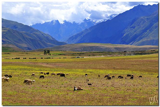 就是以秘鲁安第斯山区[1]原产的玛卡胚体精粉