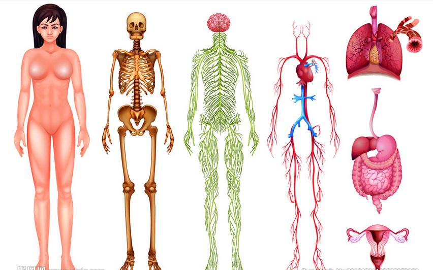 人体解剖实验学