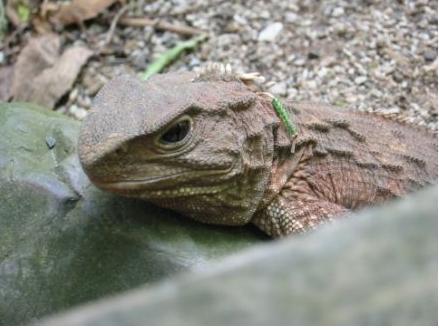 研究结果显示,虽然在非常长时期的进化中大蜥蜴的物理身体结构未发现