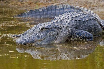 最早的两栖动物牙齿有迷路